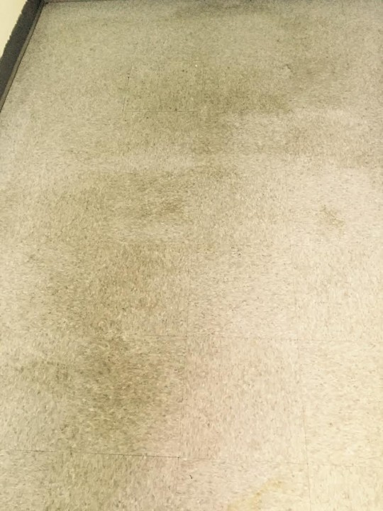 Floor Cleaning at Sunnybrook Kennel in Concord, NC